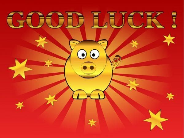 lucky-pig-237336_960_720